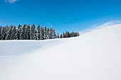 Snowy landscape, Thurner, near Hinterzarten, Black Forest, Baden-Wurttemberg, Germany