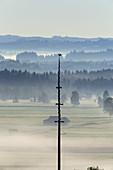 Maibaum von Großweil vor Kochelseemoos, Oberbayern, Bayern, Deutschland