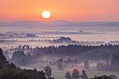 Mist to the sunrise over Kochelseemoos, Grossweil, Upper Bavaria, Bavaria, Germany