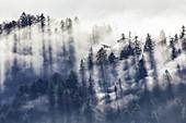 Nebelschwaden im Bergwald an der Hochalm auf dem Schergenwieser Berg, Oberbayern, Bayern, Deutschland