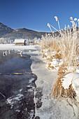 Winter am Kochelsee, Schlehdorf, Tölzer Land, Upper Bavaria, Bavaria, Germany