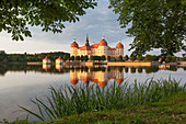 Baroque Moritzburg castle in the evening sun with its reflection in the castle pond framed by chestnut trees and reeds, near Dresden, Saxony, Germany