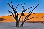 Abgestorbene Bäume im Kontrast der Dünen im Dead Vlei im Sossusvlei Gebiet, Namib Naukluft Park, Namibia
