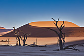 Dead trees in the contrast of the dunes in Dead Vlei in the Sossusvlei area, Namib Naukluft Park, Namibia