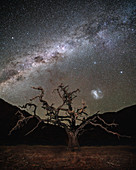 Camel thorn acacia and starry sky in the Tiras mountains, Namibia