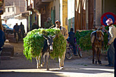 Donkey loaded with fresh, green grass in the street at the market in Rissani, Tafilalet, Morocco