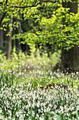 Im Frühling verwandelt Biosphärenreservat Spreewald in Brandenburg zu einem Meer aus Blüten
