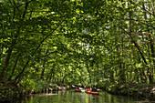 Water hiking through the wild UNESCO biosphere reserve Spreewald in Brandenburg,