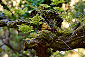 Branch covered with moss and ferns in the park of Palacio da Pena, Sintra, Lisbon, Portugal