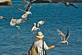 Man with hat feeds flying seagulls at the Tejo on the Praça do Comerçio, Baixa, Lisbon, Portugal