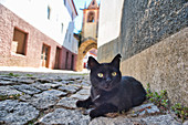 Black cat on paving stones in front of Belfry, Torre do Relógio at the Praça da República, Sao Joao de Pesqueira, Portugal,