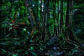 Pflanzen im Regenwald Manzanillo, Gandoca National Park, Costa Rica