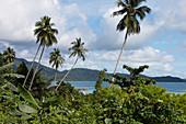 Tropische Küste und Regenwald, Tarempa, Siantan, Anambas, Indonesien