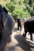 Elafanten Trekking, Mae Sa, Chiang Mai, Thailand
