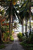 Small road to the beach, Koh Kood, Koh Kut, Trat, Thailand
