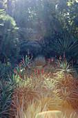 Light flooded scene in the Jardin de Majorelle, the garden of Yves Saint Laurent, Marrakech, Morocco