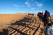Tourists on camel trekking in Erg Chebbi desert, Erg Chebbi, Merzouga, Errachidia, Morocco