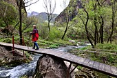 Woman walks on a wooden walkway over a brook, Worotan Gorge at Goris, South Armenia, Asia. MR available: Andrea Seifert