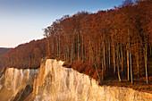 Buchenwald oberhalb der Kreidefelsen, Nationalpark Jasmund, Rügen, Ostsee, Mecklenburg-Vorpommern