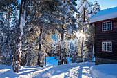 Winterlicher Pinienwald mit Holzhaus bei Sonnenschein, Heggenes, Norwegen