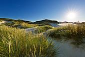 Marram grass in the dunes, Amrum, North Sea, Schleswig-Holstein, Germany