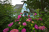 Flower arrangement at the thatched Friesenhaus, Amrum, North Sea, Schleswig-Holstein, Germany