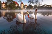 Schwäne auf dem Teich vor Schloss Blutenburg, Obermenzing, München
