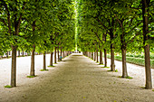 Rows of trees in Palais-Royal gardens in Paris, France