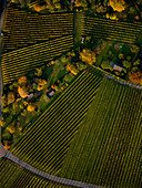 View from above textured green farmland crops