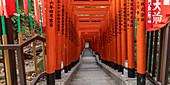 Torii gates at Hie Shrine in Chiyoda, Tokyo, Japan, Asia