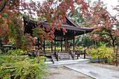 Autumn color in Nashinoki-Jinja Shrine in Kyoto, Japan, Asia