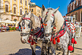 Horse drawn carriage in the main square, Rynek Glowny, in the medieval old town, UNESCO World Heritage Site, Krakow, Poland, Europe
