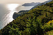 Vineyards on the coast of Cinque Terre, Italy