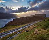 Ruhige Szene mit Schafen und Straße an der Küste bei Sonnenuntergang, Eidi, Färöer