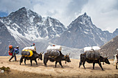 A caravan of yaks carrying heavy loads on its way to Everest Base Camp. The trek to Everest Base Camp (EBC) is possibly the most dramatic and picturesque in the Nepalese Himalaya. Not only will you stand face to face with Mount Everest, Sagarmatha in Nepali language, at 8,848 m (29,029 ft), but you will be following in the footsteps of great mountaineers like Edmund Hillary and Tenzing Norgay. The trek is scenic and offers ever-changing Himalayan scenery through forests, hills and quaint villages. A great sense of anticipation builds as you trek up the Khumbu Valley, passing through intriguing