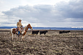 Clouds over rancher herding cattle on horse and looking at camera, Oregon, USA