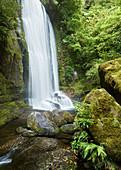 Korokoro Falls, Te Urewera National Park, Hawke's Bay, North Island, New Zealand, Oceania