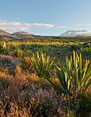 Mount Ngauruhoe, Mount Ruapehu, Tongariro Nationalpark, Nordinsel, Neuseeland, Ozeanien