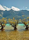 Weiden, Glenorchy, Lake Wakatipu, Otago, Südinsel, Neuseeland, Ozeanien