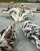 Driftwood at Maori Beach, Bruce Bay, West Coast, South Island, New Zealand, Oceania