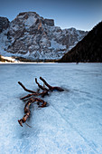 Snow layer with frozen branch on frozen Lake Braies, in the background Dolomites mountain massif in winter, Lago di Braies, Braies, South Tyrol, Italy
