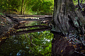 Old wooden bridge leads over rivulets by the environment reflects crystal clear.