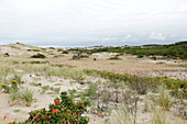 Dune Landscape, National Seashore, Cape Cod, Massachusetts, USA