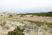 Dune Landscape, National Seashore, Cape Cod, Massachusetts, USA