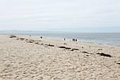 Spaziergänger am Strand Meadow Beach, Cape Cod, Massachusetts, USA