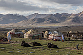 Kyrgyz yurt settlements with yaks in Pamir Mountains, Moqur, Afghanistan