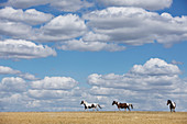 Brown and white horses in sunny rural field under blue sky with clouds