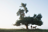 Donkey and horse standing under rural tree