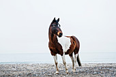 Brown and white horse standing on beach