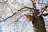 Vogelhaus im idyllischen Kirschblaum mit Frühlingsblüten